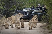 South africa luxury safari londolozi